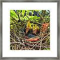 Baby Mockingbirds Framed Print