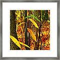 Baby Tree Foliage Framed Print