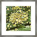 Bacteria On Hops Leaf, Sem Framed Print