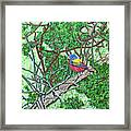 Bald Head Island, Painted Bunting At Defying Gravity Framed Print