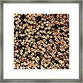 Bamboo Days Framed Print