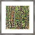 Bamboo View Framed Print