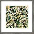 Bamboo2 Framed Print