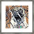 Bandit 2 Framed Print