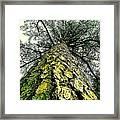 Bark Up The Tall Pine Tree Abstract In Felicina  Louisiana Framed Print