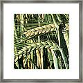 Barley, Green Stage Framed Print