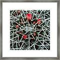 Barrel Cactus With Pink Blooms Framed Print