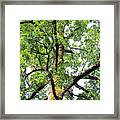 Basking In The Light Of The Lord Framed Print