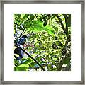 Beautiful Bird Perched In A Tree Framed Print