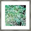Beautiful Coral Reef 2 Framed Print