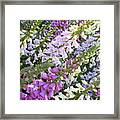 Beautiful Foxglove Framed Print