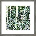 Beautiful Green Leaf Bamboo Framed Print