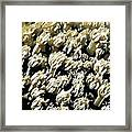Beautiful Marine Plants 4 Framed Print