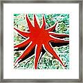 Beautiful Marine Plants 9 Framed Print