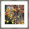 Beauty Of Fall Framed Print
