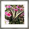 Beautyfly In Pink Framed Print