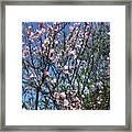 Beautiful Spring. Blooming Tree 2 Framed Print