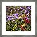 Bed Of Flowers Framed Print