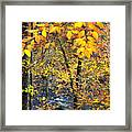 Beech Leaves Birch River Framed Print