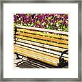 Bench In The Tulips Framed Print