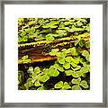 Beneath The Redwoods Framed Print