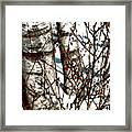 Berries And Birches Framed Print
