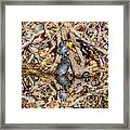 Bidwell Turtles In Fall Framed Print