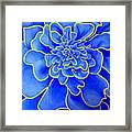 Big Blue Flower Framed Print by Geoff Greene