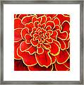 Big Red Flower Framed Print