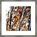 Birch And Oak And Sun Framed Print