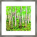 Birch Forest, Painting Framed Print