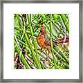 Bird In The Brush H D R Framed Print