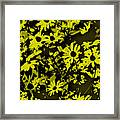 Black Eyed Susan's Framed Print