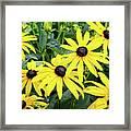 Black Eyed Susans- Fine Art Photograph By Linda Woods Framed Print