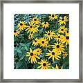 Black Eyes Of The Sun Framed Print