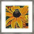 Blackeyed Susan With Bee Framed Print