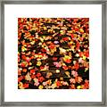 Blazen Leaves Framed Print