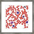 Blood Smear, Light Micrograph Framed Print by Steve Gschmeissner