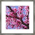 Blooming Red Buds Framed Print