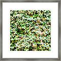 Blooming Shrubs  Framed Print