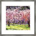 Blossom Fantasy Framed Print
