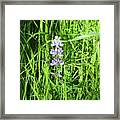 Blossom In The Grass Framed Print