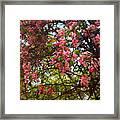 Blossoms In The Shanendoahs Framed Print