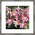 Blossoms Of Chase Lane Framed Print