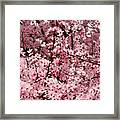 Blossoms Pink Tree Blossoms Giclee Prints Baslee Troutman Framed Print