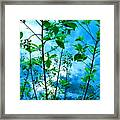 Nature's Gifts Of Blue And Green Framed Print