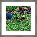 Blue Birds In Winter Framed Print
