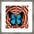 Blue Black Butterfly In Basket Framed Print