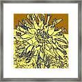 Blue-edged Dahlia Framed Print