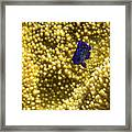 Blue Fish In Coral Framed Print